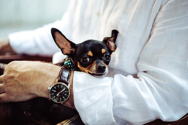 a man holding his chihuahua