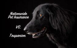 a Super Pets comparison of Nationwide Pet Insurance and Trupanion