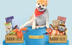 an overview of the barkbox delivery service for dogs
