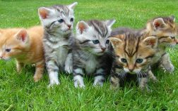A group of kittens in the grass