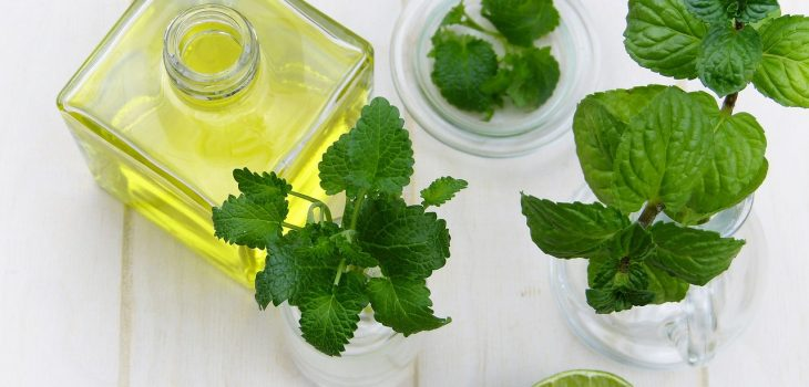 peppermint leaves and oil