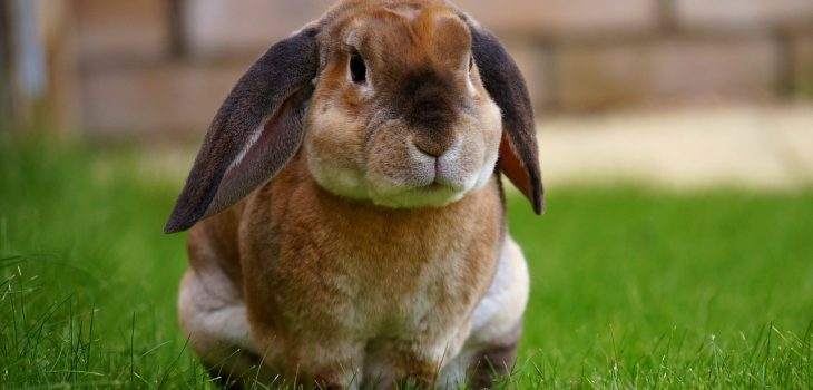 rabbits can make a great low maintenance pet