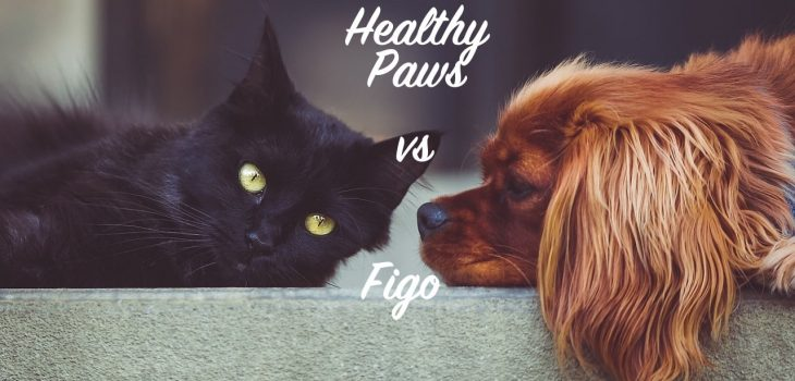 SuperPets comparison guide of Figo and Healthy Paws pet insurance