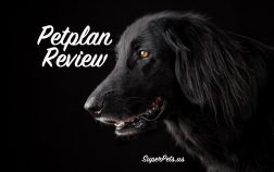 SuperPets looks at Petplan insurance coverage options