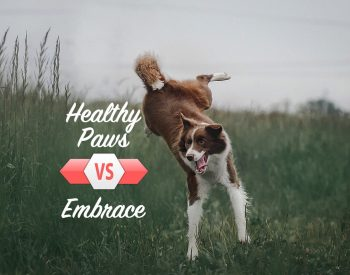 Healthy Paws vs. Embrace: The Winner is?
