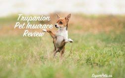 SuperPets reviews Trupanions pet insurance coverage