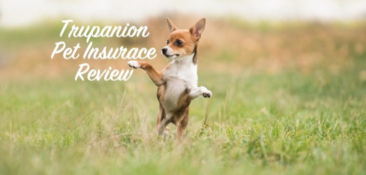 SuperPets reviews Trupanions pet insurance coverage