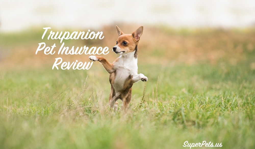 2021 Trupanion Reviews, Costs, Coverage + Complaints?