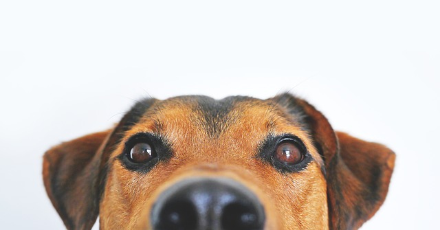 a dog peeks up at the camera