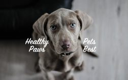 SuperPets compares Healthy Paws to Pets Best