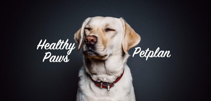 superpets compares petplan to healthy paws