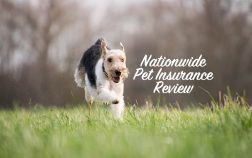 SuperPets examines Nationwide pet insurance