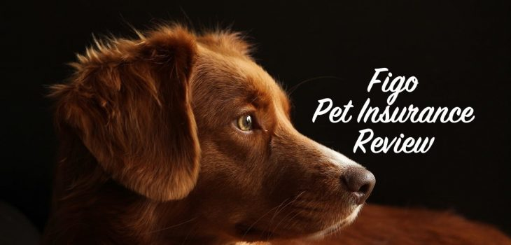 SuperPets reviews the Figo pet insurance program